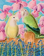 Jeanette K - Peach-faced Lovebird