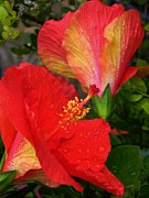 Peach Originals - Peach Hibiscus 2 by Warren Thompson