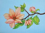 Carol Sabo - Peach Magnolias