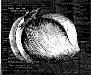 French Country Mixed Media Posters - Peach on Black and White French Typography Poster by Anahi DeCanio