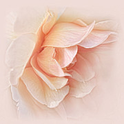 Peach Rose Photos - Peach Rose Flower Tranquillity Enhanced by Jennie Marie Schell