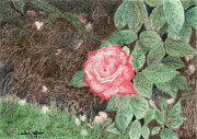 Raindrops Drawings Prints - Peach Rose Print by Linda Ginn