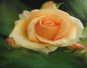 Decorating Mixed Media - Peach Rose On Canvas by Dennis Buckman