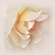 Peach Rose Photos - Peach Rose Tranquillity by Jennie Marie Schell