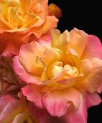 Peach Rose Posters - Peach Roses Flower Bouquet Poster by Jennie Marie Schell