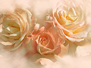 Orange Florals Posters - Peach Roses in the Mist Poster by Jennie Marie Schell