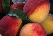 Peaches Photo Prints - Peaches - Maryland Print by Harold E McCray