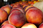 Peaches Prints - Peaches as Far as the Eye Can See... Print by Mindee Fredman