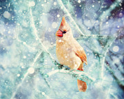 Baby Cardinals Posters - Peaches in the Snow Poster by Amy Tyler