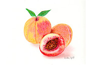Peaches Drawings Posters - Peaches Poster by Linda Ginn