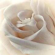 Peaches N Cream Print by Darlene Kwiatkowski