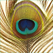 Fuad Azmat - Peacock Art
