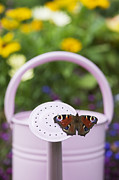Watering Can Framed Prints - Peacock Butterfly Framed Print by Tim Gainey