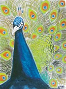 Orange Colored Pastels Prints - Peacock Displaying His Feathers Print by Lisa Wiljanen Anderson