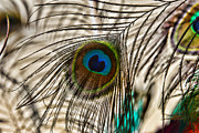 Peafowl Photos - Peacock Eye Feather by Paul Ward