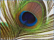 Fuad Azmat Prints - Peacock Eye Print by Fuad Azmat