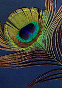 Peacock Digital Art Metal Prints - Peacock Feather Metal Print by Ann Powell