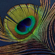 Peacock Digital Art Metal Prints - Peacock Feather on Square Metal Print by Ann Powell