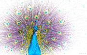 Peacock Digital Art Metal Prints - Peacock Metal Print by Holly Kempe
