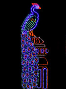 Nights Originals - Peacock in lights by Sapna Mondol