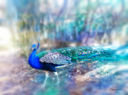 Diana Haronis - Peacock in the Mist