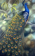 Plumes Prints - Peacock Print by Laura Regan
