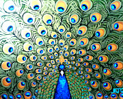 Original Paining Framed Prints - Peacock Framed Print by Marina Joy