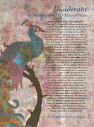 Desiderata Drawings - Peacock Pointing to Desiderata by Claudette Armstrong