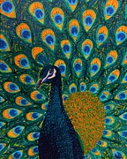 Pride Paintings - Peacock by Vicki Maheu
