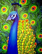 Tropical Bird Art Print Posters - Peacock VII Poster by John  Nolan