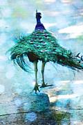 Diana Haronis - Peacock Walking Away
