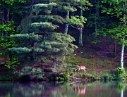 Smokey Mountains Paintings - Peaks of Otter Deer by John Haldane