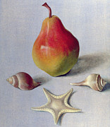 Seashells Paintings - Pear and Shells by Tomar Levine