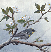 Warbler Paintings - Pear Blossoms by Mike Stinnett