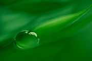 Water Drop Photos - Pearl by Kristin Kreet