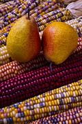 Kernels Posters - Pears and Indian corn Poster by Garry Gay