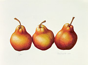 Fruit Still Life Posters - Pears Poster by Annabel Barrett