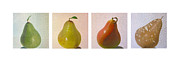 Pear Prints - Pears in season Print by Don Young