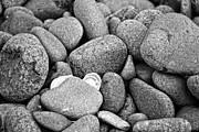 Pebble Photo Originals - Pebble Beach by Salena Bonnell