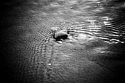 Tranquil Pyrography Posters - Pebble In The Water Monochrome Poster by Raimond Klavins