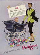 Parents Drawings Prints - Pedigree  1952  1950s Uk Prams Babies Print by The Advertising Archives