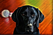 Black Lab Digital Art - Pedroia by Justin Mac Intyre
