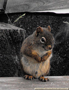 Eric Menk Metal Prints - Peeing Red Squirrel Metal Print by Eric Menk