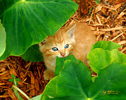 Kitty Digital Art - Peek A Boo II by Jeff McJunkin