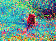 Groundhog Digital Art Prints - Peek-A-Boo Print by Joseph Wiegand