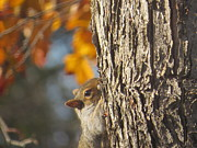 Elisabeth Ann - Peek A Boo Squirrel