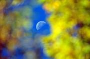 Andrea Kollo - Peeking Through the Autumn Trees