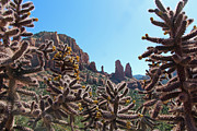 Wendi Evans Art - Peeking Through the Cholla by Wendi Evans