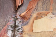 Colorful Bark Photos - Peeling Bark - Horizontal by Carol Groenen