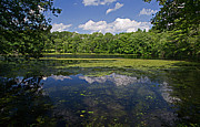 David Hintz - Peeptoad Pond - Rhode...